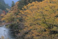 秋川渓谷の秋色