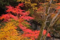 中津峡の秋Ⅱ