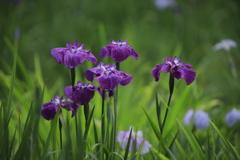 紫の世界Ⅴ