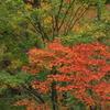 鳥居観音の秋Ⅱ