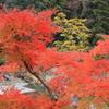 御岳渓谷の秋