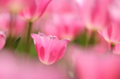 春の調べ Ⅱ