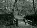 静かの森の招待状