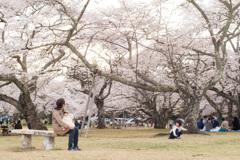 今年の桜は