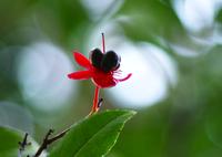 SIGMA SIGMA SD1 Merrillで撮影した(ミッキーマウスの木)の写真(画像)