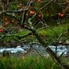 川べりの残秋