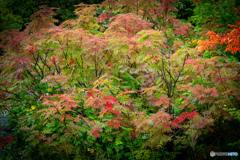 初秋の彩-Ⅲ