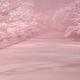 冬の夜桜(再編集)