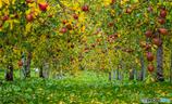 林檎の国から~晩秋編~Ⅱ