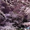 深夜桜2016