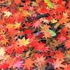 秋の彩り2014-26