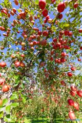 林檎の国から2018