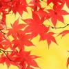 秋の彩り2014-28