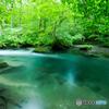 朝の渓流-Ⅴ