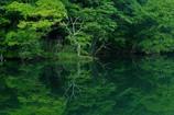 新緑の蔦沼