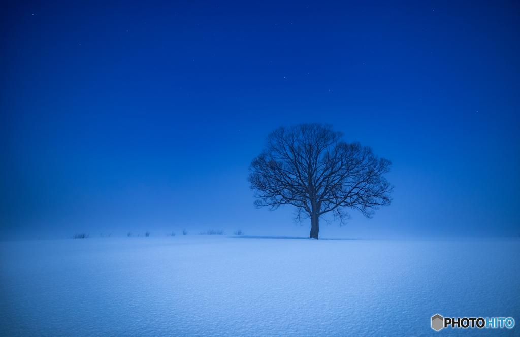 12月30日のシンボルツリー