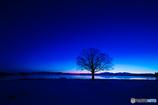 夜明け前のシンボルツリー