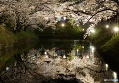 夜桜の印象
