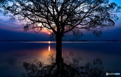 夜明けのシンボルツリー