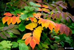 初秋の彩-Ⅰ