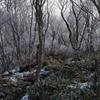 黒檜山で薄霧氷