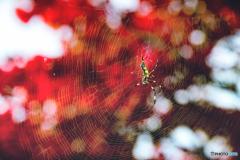 『 紅の絨毯 』