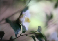 CANON Canon EOS 6D Mark IIで撮影した(今日の出逢い)の写真(画像)