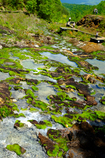 チャツボミゴケ公園3