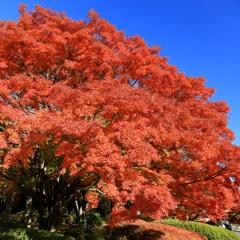 〜鮮やかな季節〜