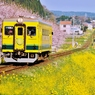 菜の花列車 春を行く