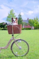 高原と自転車・・・そして僕