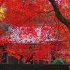 気分は秋の京都(その2)