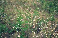 空き地の園