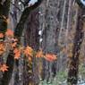 落屑と紅葉と