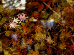 沈みゆく秋