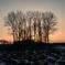裸木の夕べ