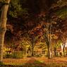 CANON Canon EOS 6Dで撮影した(中庭の晩秋)の写真(画像)