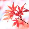 CANON Canon EOS 6Dで撮影した(晩秋)の写真(画像)