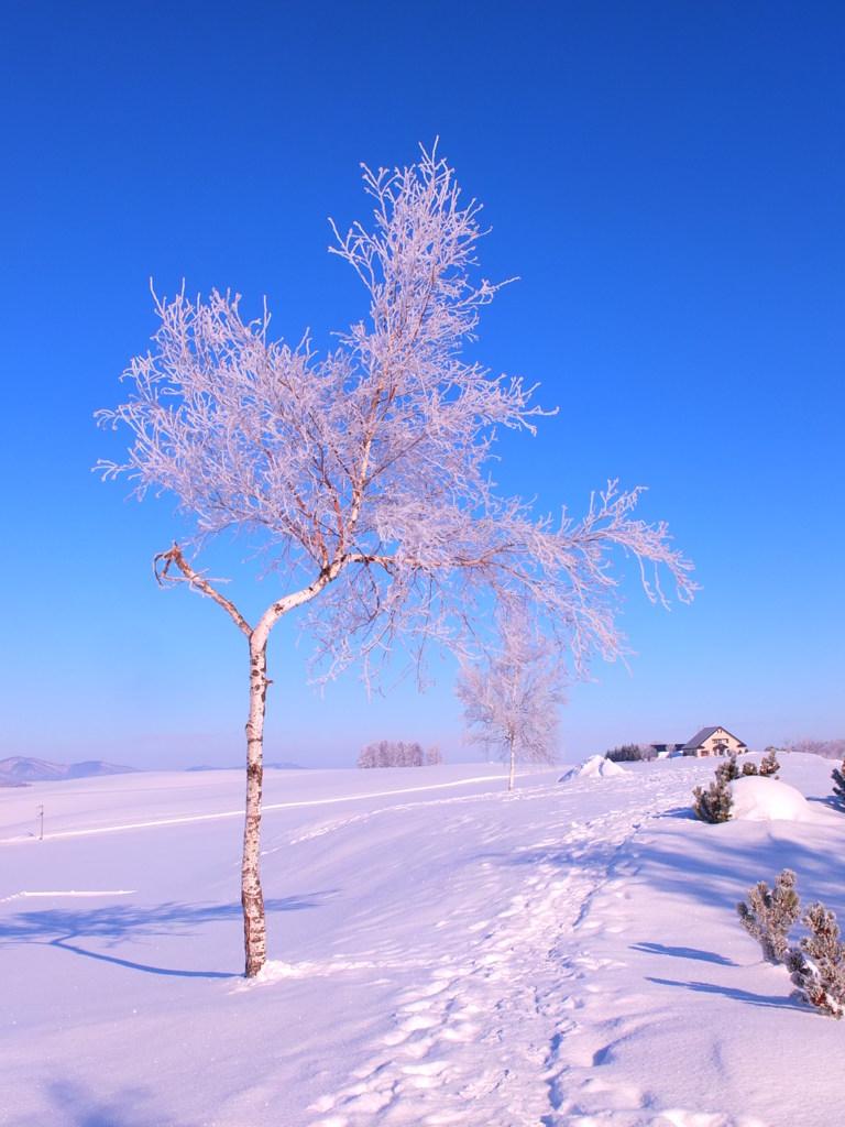 冬晴れと樹氷の華