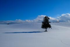 北の国から、八幡丘の樹