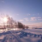 FUJIFILM X10で撮影した(朝日をあびてマイルドセブン1)の写真(画像)