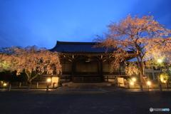 2018桜紀行(妙満寺)