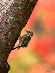 木の上のドラマー