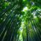嵐山03 竹林之道