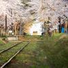 桜とメロスの思い出Ⅱ