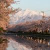 弘前公園の春Ⅱ