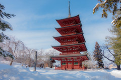 冬の快晴~五重塔~