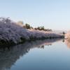 弘前公園の春Ⅳ