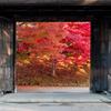 弘前公園の秋・南内門