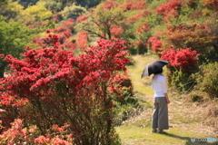 ツツジの咲く丘